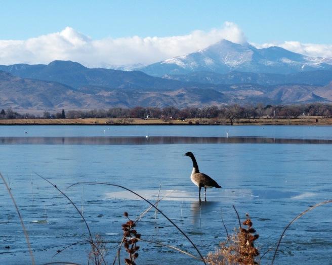 Sunday Goose, Lake McIntosh, Longs Peak, Colorado
